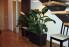 Топ 10 комнатных растений для семейного счастья