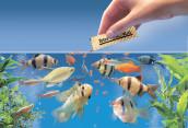 Как кормление рыбок сказывается на их здоровье
